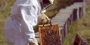 diferencia entre jalea real y miel